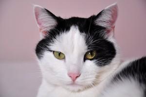 cats-796437_640