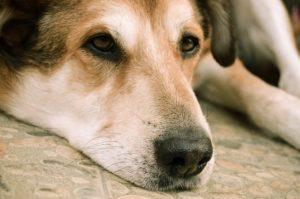 dog-1563594_640